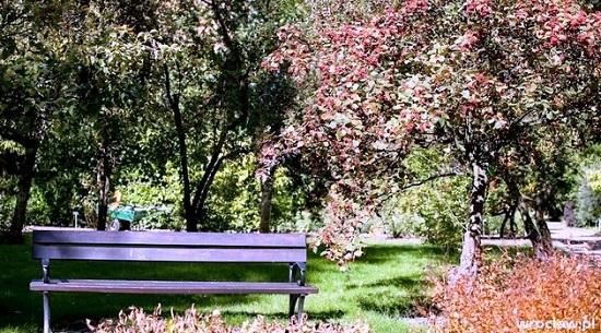 ботанический сад вроцлава