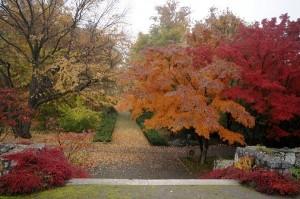 Ботанический сад. Краков